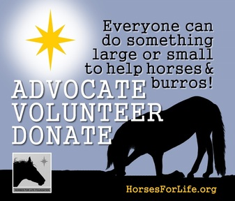 Giving Tuesday Horses